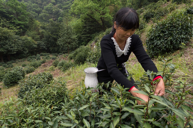 20777_31_HePo-teagarden.jpg