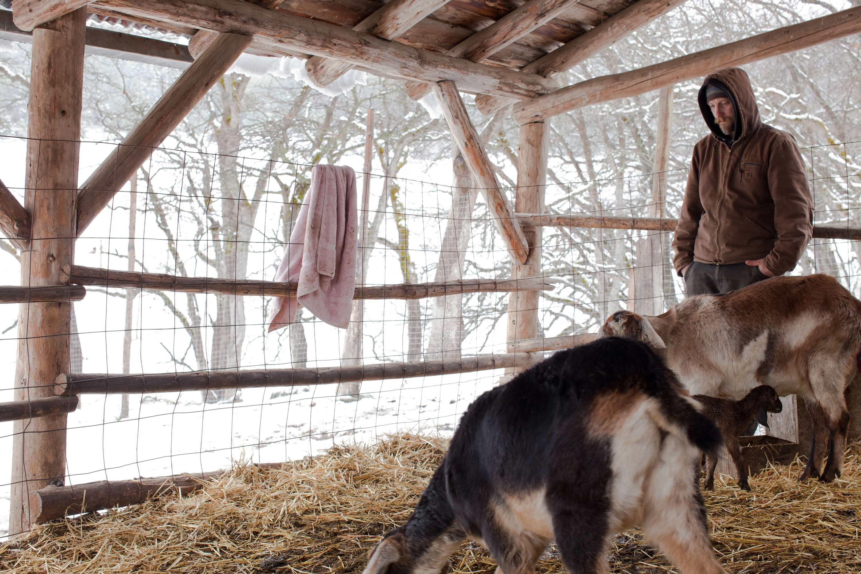 Boone_mookie-with-goats.jpg