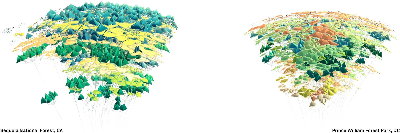 sequoia_william.jpg